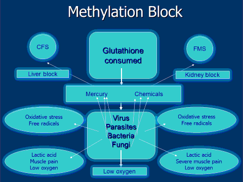 methylation-block