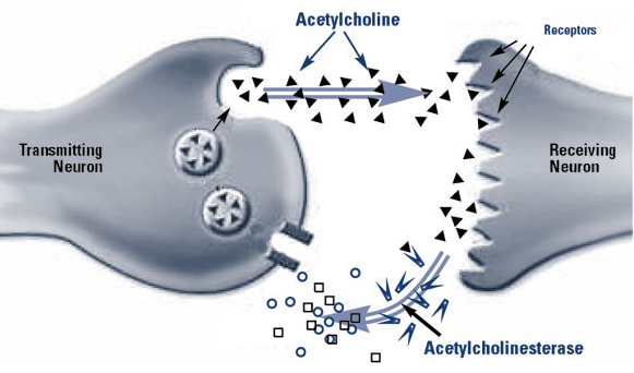 acetylkolin